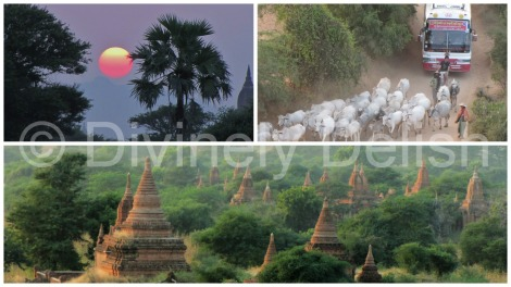 collagebagan-2-2